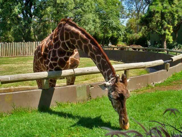 Buenos Aires com crianças, Zoológico de Palermo